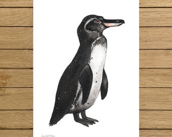 Galapagos Penguin, Endangered Species, Watercolor Illustration, Giclée Print, A4 or A5 size