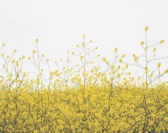 Wildflower Photography, Wildflower Art, Yellow Wildflowers, Super Bloom, Wildflower Print, Summer Decor, Wall Decor, Fine Art Photography