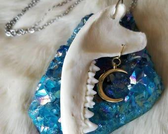 Possum Jaw Bone Gold Moon Necklace