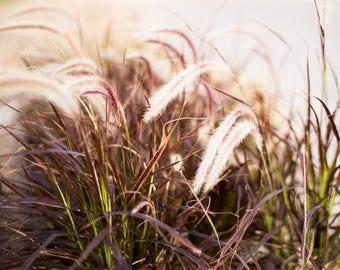 8x10 Horizontal Print - Grasses