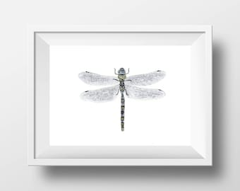 Gray Dragonfly Painting Art Print.  Dragonfly Wall Art.  Dragonfly Decor.  Bug Art. Insect Illustration.