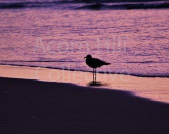 Beach Sunrise Photography Print, Seagull Photograph, Bird on Beach, Orange and Purple Wall Art, Ogunquit Maine, Ocean Office Wall Decor