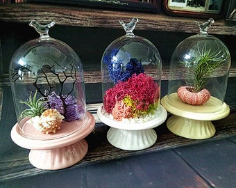 3 Set/Pack Handblown Bird Glass Cloche Dome Display with Ceramic Base Moss terrarium Fairy Garden DIY Terrarium Display Wedding Centerpiece