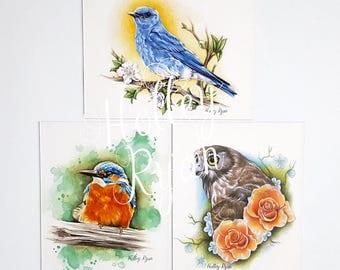 Bird Magnets, Owl, Kingfisher, Blue Jay