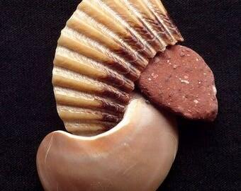 Neocon Shell Pin quarantasette