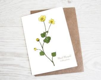 Marsh Marigold, Botanical Wildflower Print, Greeting Card