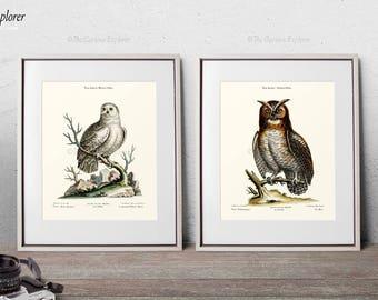 Ornithology Art Set, Bird Poster Set, Teen Room Decor Set, Bird Nursery Decor, Bird Set, Animal biology Set, Art Poster Set Of 2 - E17Set21