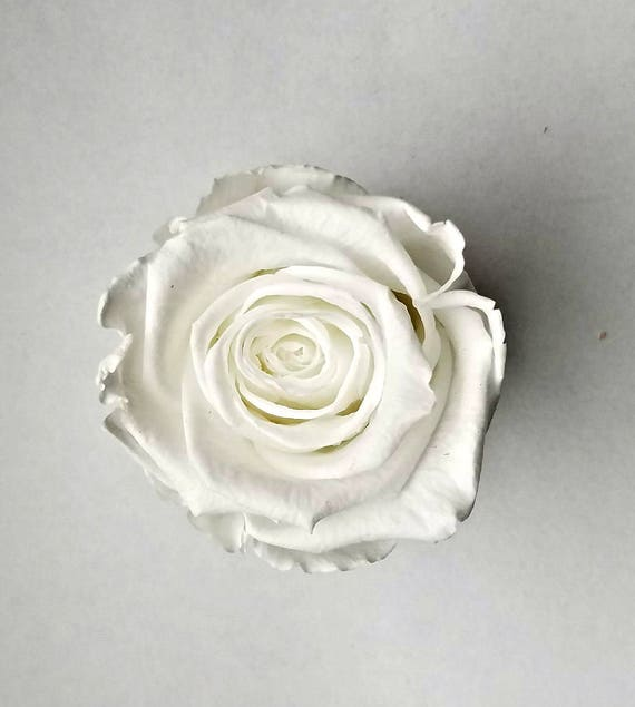 Preserved rose 6 pack, White rose, rose, Everlasting rose, Forever rose, wedding rose, engagement rose