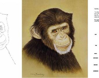 Chimp Portrait Starter Pack