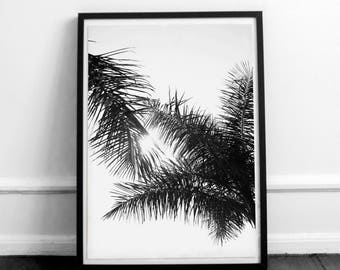 Black and white palms. Printable palms. Palm tree beach. Palm tree photography. Instant download.