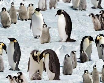 Penguins in the snow, Elizabeth Studio