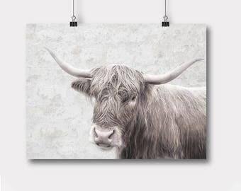 Cow,Printable, Farm Animal Wall Art, Instant Download, Highland Cow Poster, Peekaboo, Animal Photo Art, Cow Peekaboo, Nursery Print