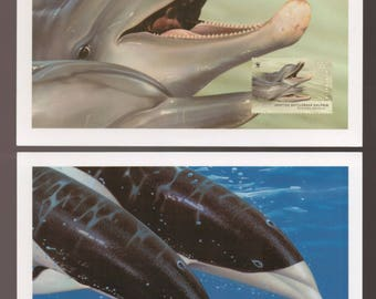 DOLPHIN - Spotted Bottlenose and Southern Right Whale Dolpin Australia Card or Maxi Card - SEE TEXT