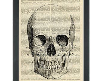 Vintage anatomy drawing Skull Dictionary Art Print