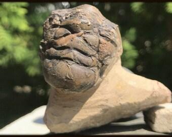 Crotalocephalus Trilobite Fossil found in Morocco - Devonian Period - FST167