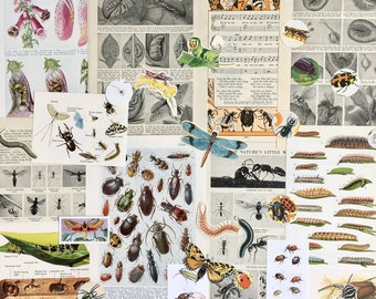Insect Paper pack | Insect & Bug Ephemera | Vintage Scrapbooking Kit | Nature Journal | Junk Journal |Creepy Crawlies Collage | Altered Art