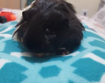 Guinea Pig High Rising Fluffy Bed