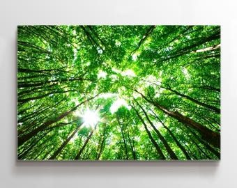 Large Wall Art Landscape Canvas Print - Green Forest Taken from Ground