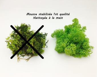 Stabilized Moss, moss green, Moss, dried, terrarium, reindeer Moss, stabilized Moss, terrarium kit, lichen