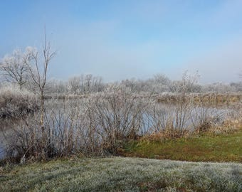 Frosty Morning at the pond