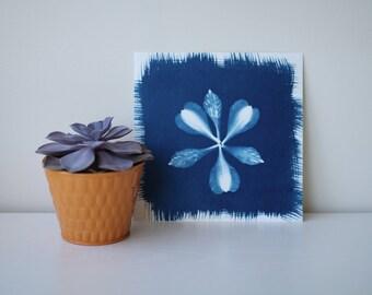 Cyanotype Flower Petals Print