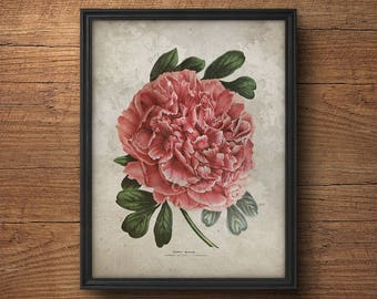 Pink peony botanical print, Peony art, Peony poster, Vintage botanical illustration, Botanical wall decor, Pink flower, Large wall art