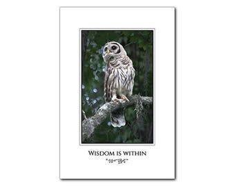 Barred Owl -  Owl Poster - Barred Owl Print - 12 x 18