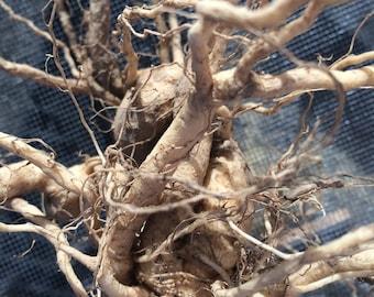 Ashwagandha Root Tincture, organic Withania somnifera herb