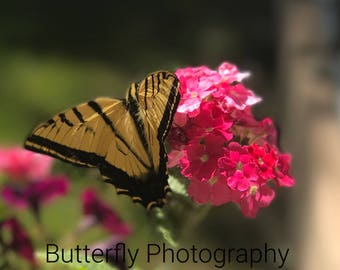 Time to Fly Butterfly