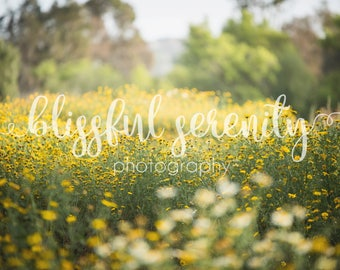 Beautiful open field covered in yellow and white flowers digital backdrop