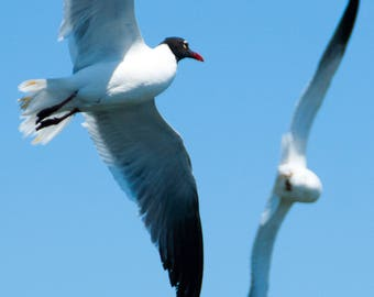 Seagull Smashup?