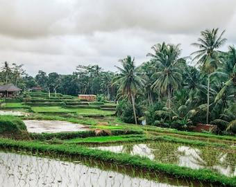 Rice Paddy Fields Bali, Large Wall Decor, Travel Photography, Contemporary Art, Photos on Wood, Modern Art
