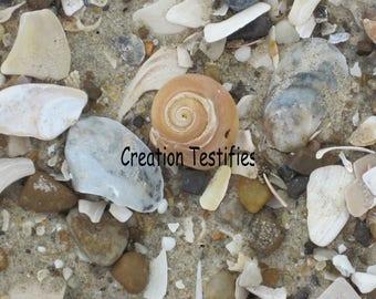 Nature photograph - Spiral Shell