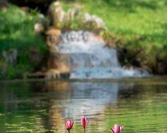 Original fine art photography print - Red flower and waterfall