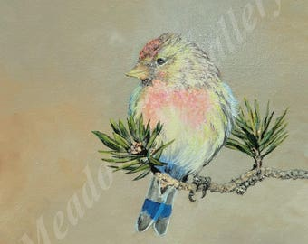 Just Hanging Around, original artwork, Acrylic painting, realistic, realism, bird