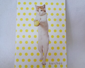 VJ93 : Japanese Envelope 5 pieces set ,kaichan cat