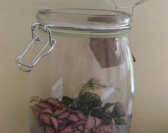 sold tropical terrarium in clear jar