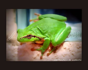 Photo 30X40cm Green Frog on a window