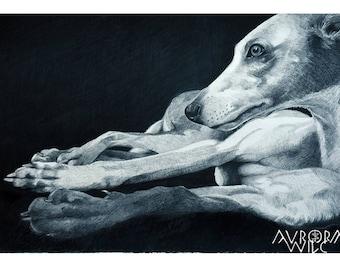 Whippet A3 Fine Art Print