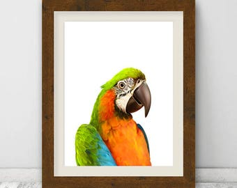 Bird Print, Parrot Wall Art, Tropical Wall Art Decor, Colour Photo, Macaw Parrot, Tropical Bird Print, Instant Download, Digital Print