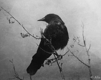 Crow Vision