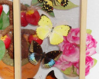 6 REAL MIXED ButterfliesTaxidermy Double Glass In Freame