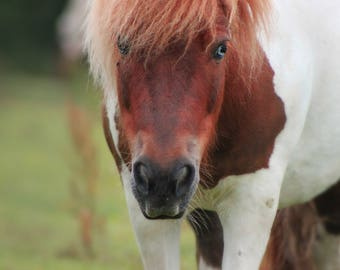 Horse digital print