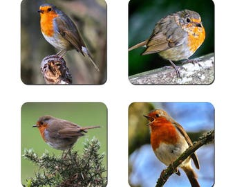 Set of 4 Robin drinks coasters featuring award winning photography by UniquePhotoArts.