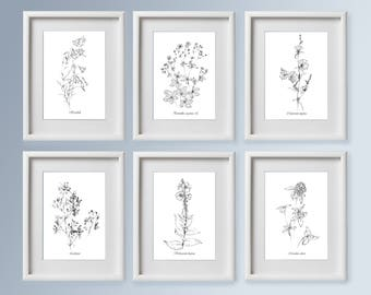 Set Of 6 Wild Flowers Sketches, Botanical Art, Realistic Artwork, Line  Drawing,