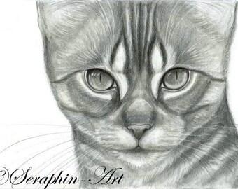 Abyssinian Kitten Original Graphite Portrait