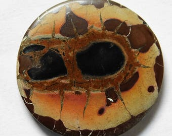 31.15 Cts Natural Septarian Gronated Cabochon Loose Gemstone