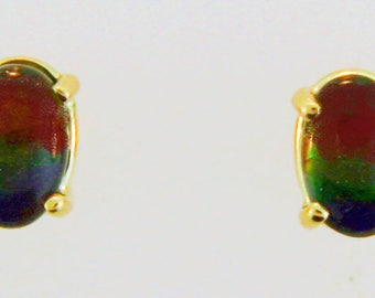 Canadian Ammolite  14k Yellow  Gold Stud Earrings.