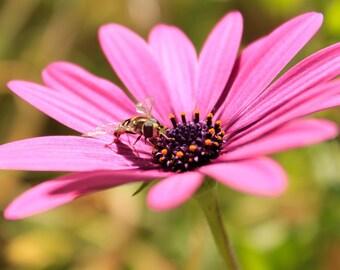 Flower Macro Photograph