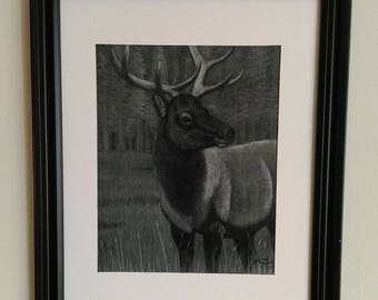 Charcoal Drawing of Roosevelt Bull Elk, 8 x 11 Print